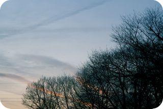 Thosetrees