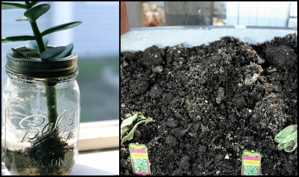 Plantedcollage