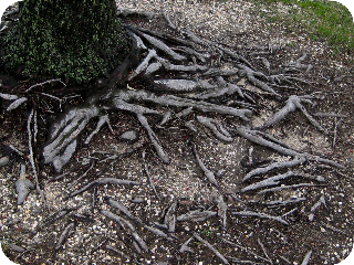 Treeveins