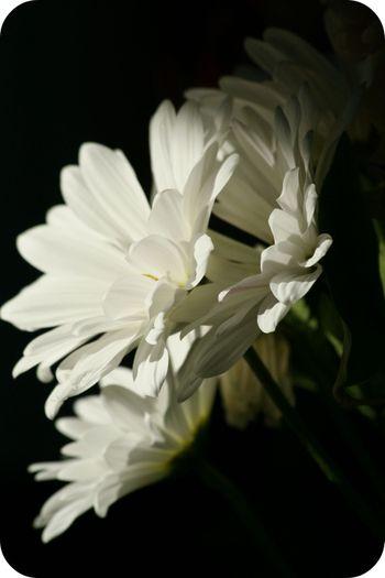 Annieflower